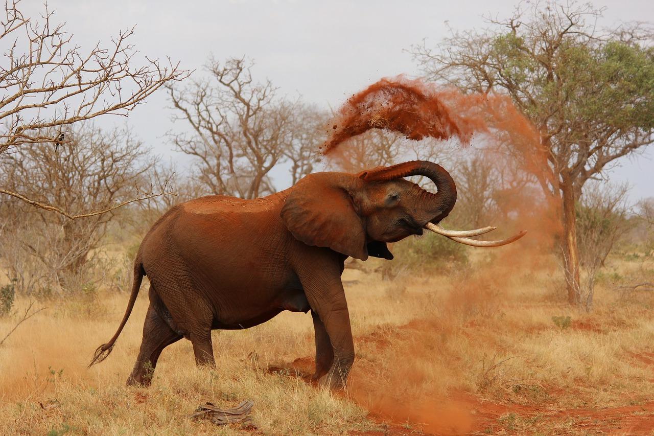 kenia elephant-111695_1280