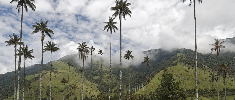 Colombia, ontdekkingsreis  14d/13n