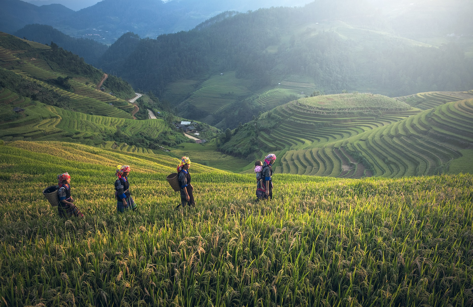 indonesie bali agriculture-1793403_1920