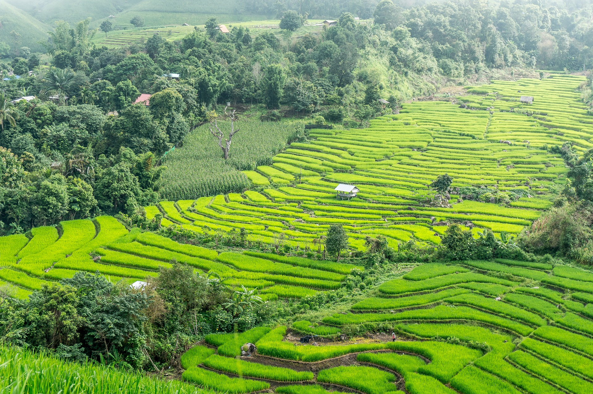 thailand rice-terraces-2224264_1920